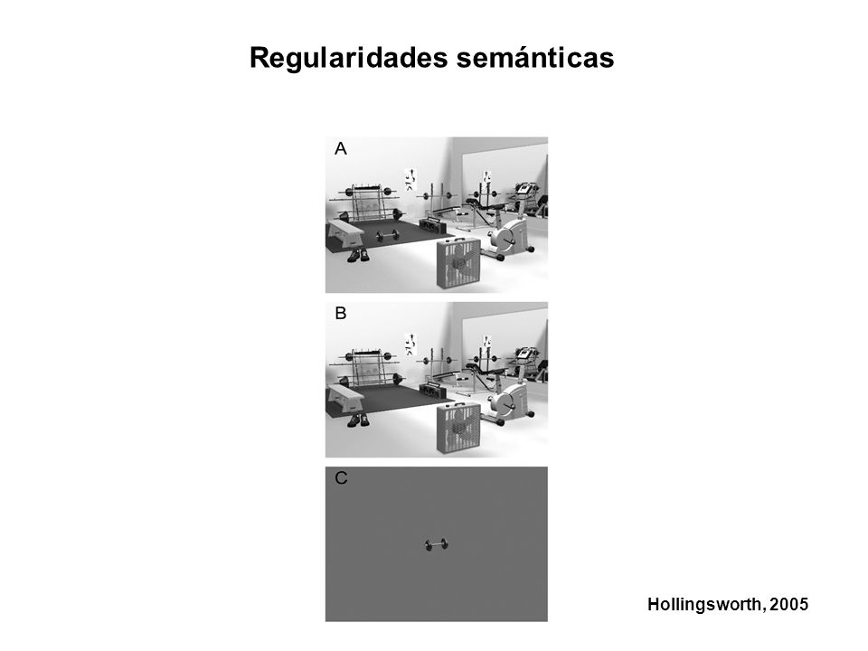 Regularidades semánticas Hollingsworth, 2005