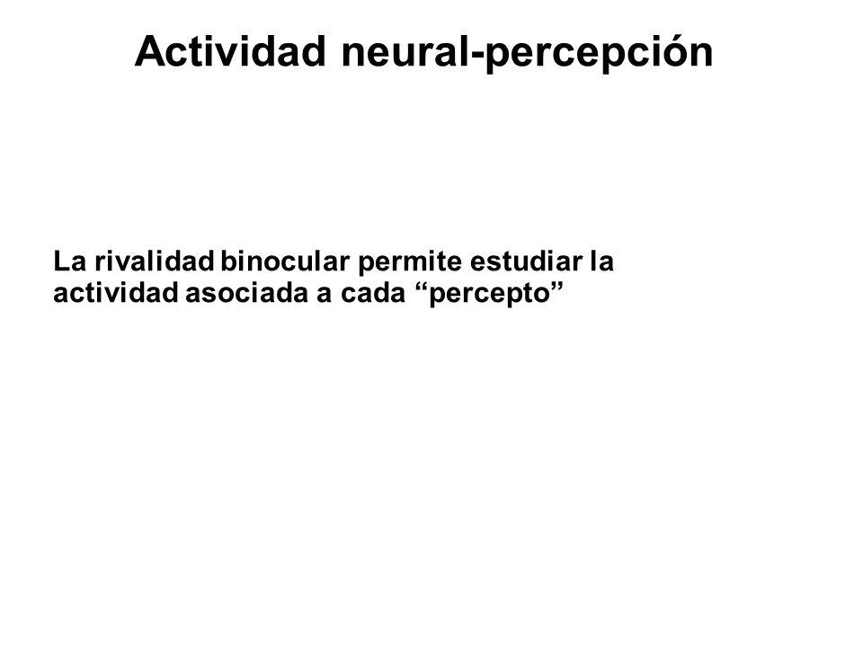 Actividad neural-percepción La rivalidad binocular permite estudiar la actividad asociada a cada percepto