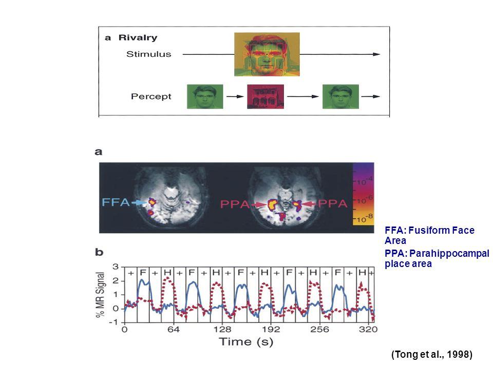(Tong et al., 1998) FFA: Fusiform Face Area PPA: Parahippocampal place area