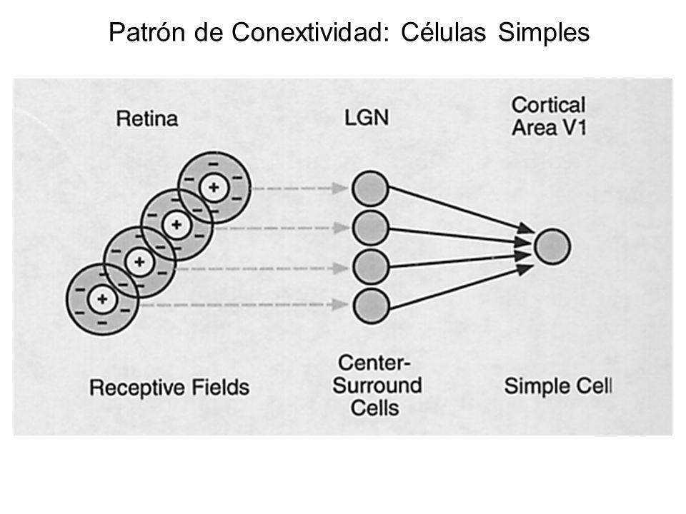 Patrón de Conextividad: Células Simples