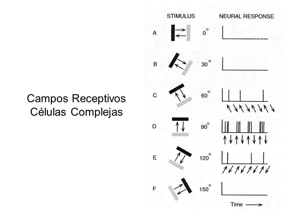 Campos Receptivos Células Complejas