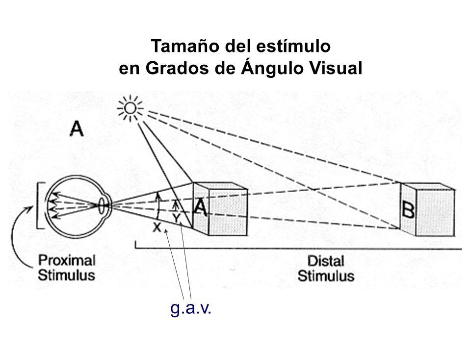 Tamaño del estímulo en Grados de Ángulo Visual g.a.v.
