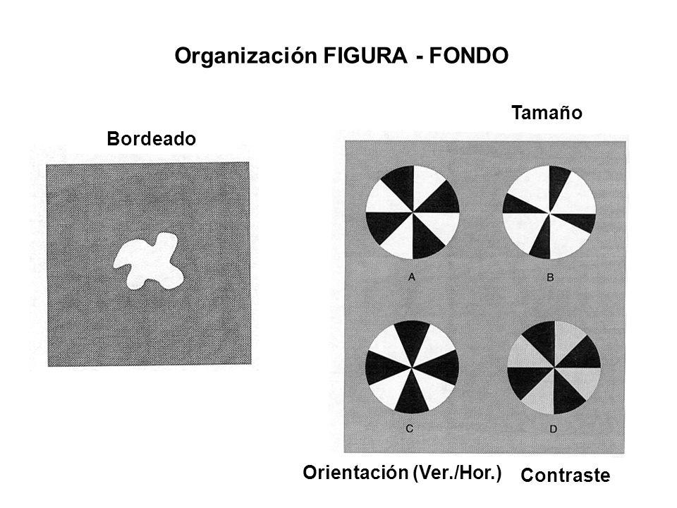 Organización FIGURA - FONDO Bordeado Tamaño Orientación (Ver./Hor.) Contraste