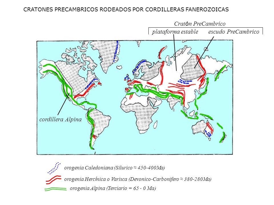 plataforma estable cordillera Alpina CRATONES PRECAMBRICOS RODEADOS POR CORDILLERAS FANEROZOICAS orogenia Herc í nica o Varisca (Devonico-Carbonifero 380-280Ma) orogenia Alpina (Terciario = 65 - 0 Ma) orogenia Caledoniana (Silurico 450-400Ma) escudo PreCambrico Crat ó n PreCambrico