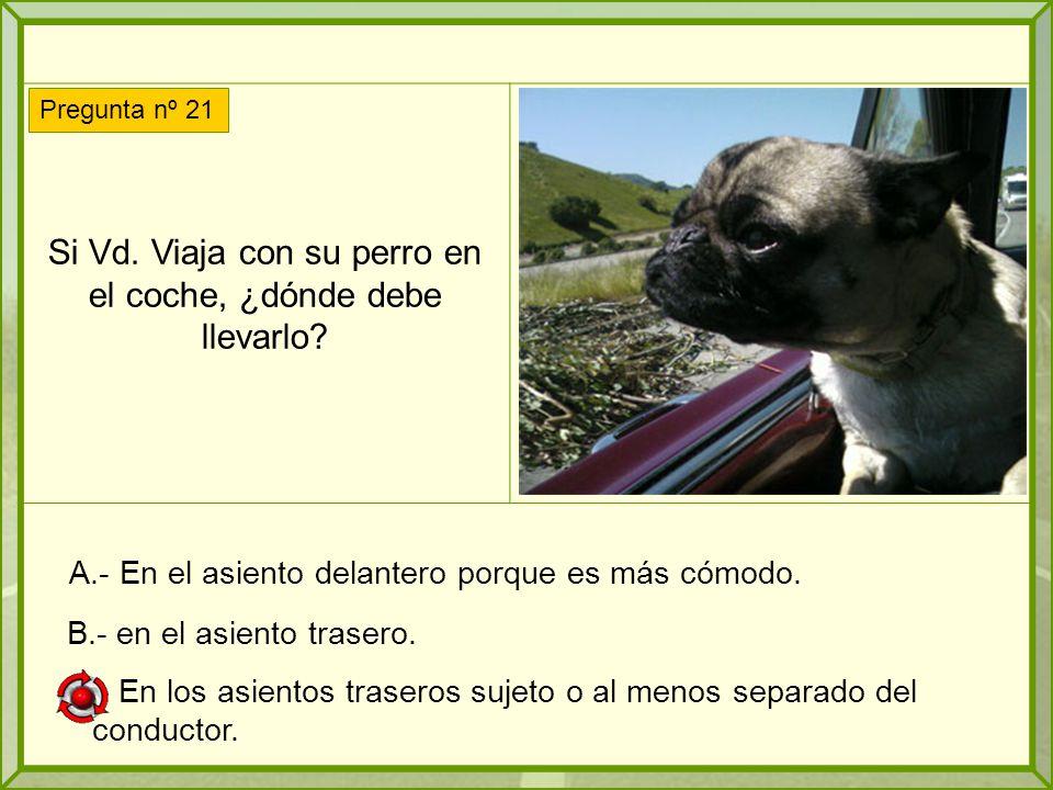 Si Vd.Viaja con su perro en el coche, ¿dónde debe llevarlo.