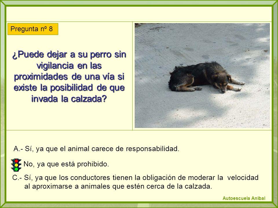 ¿Puede dejar a su perro sin vigilancia en las proximidades de una vía si existe la posibilidad de que invada la calzada? A.- Sí, ya que el animal care
