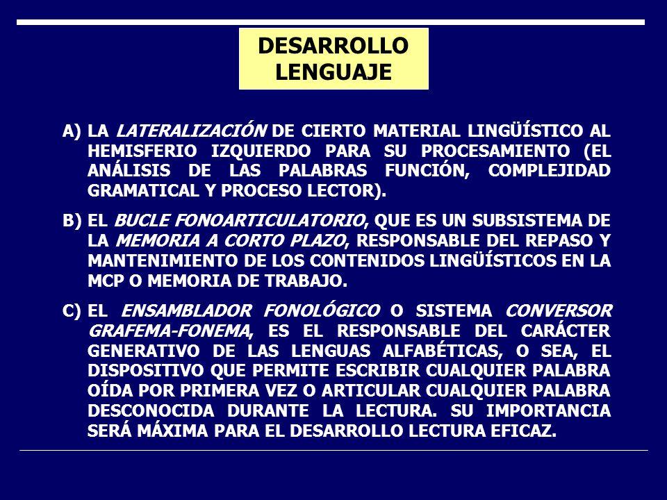 DESARROLLO LENGUAJE A)LA LATERALIZACIÓN DE CIERTO MATERIAL LINGÜÍSTICO AL HEMISFERIO IZQUIERDO PARA SU PROCESAMIENTO (EL ANÁLISIS DE LAS PALABRAS FUNC