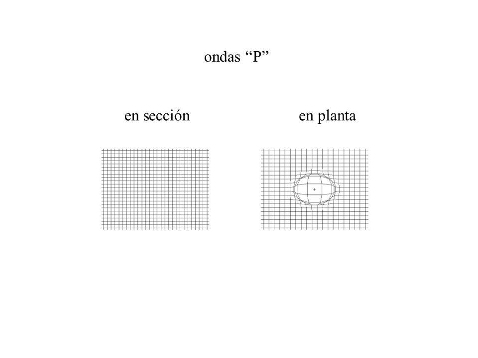 ondas P en plantaen sección