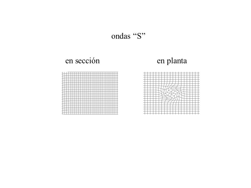 ondas S en plantaen sección