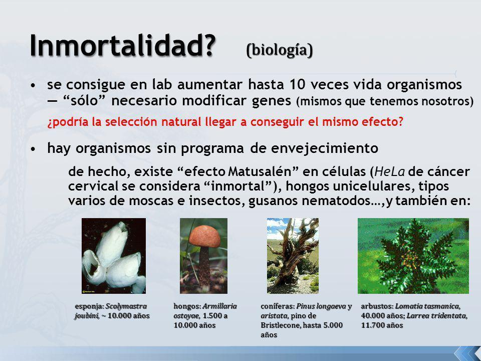 arbustos: Lomatia tasmanica, 40.000 años; Larrea tridentata, 11.700 años hongos: Armillaria ostoyae, 1.500 a 10.000 años coníferas: Pinus longaeva y a