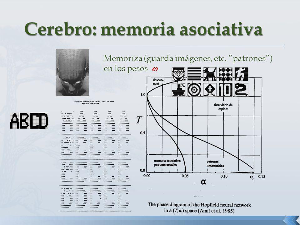 Memoriza (guarda imágenes, etc. patrones) en los pesos