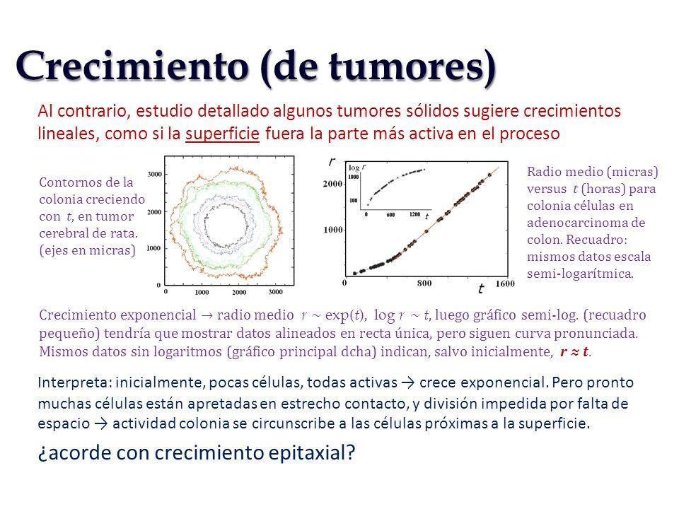 Al contrario, estudio detallado algunos tumores sólidos sugiere crecimientos lineales, como si la superficie fuera la parte más activa en el proceso I