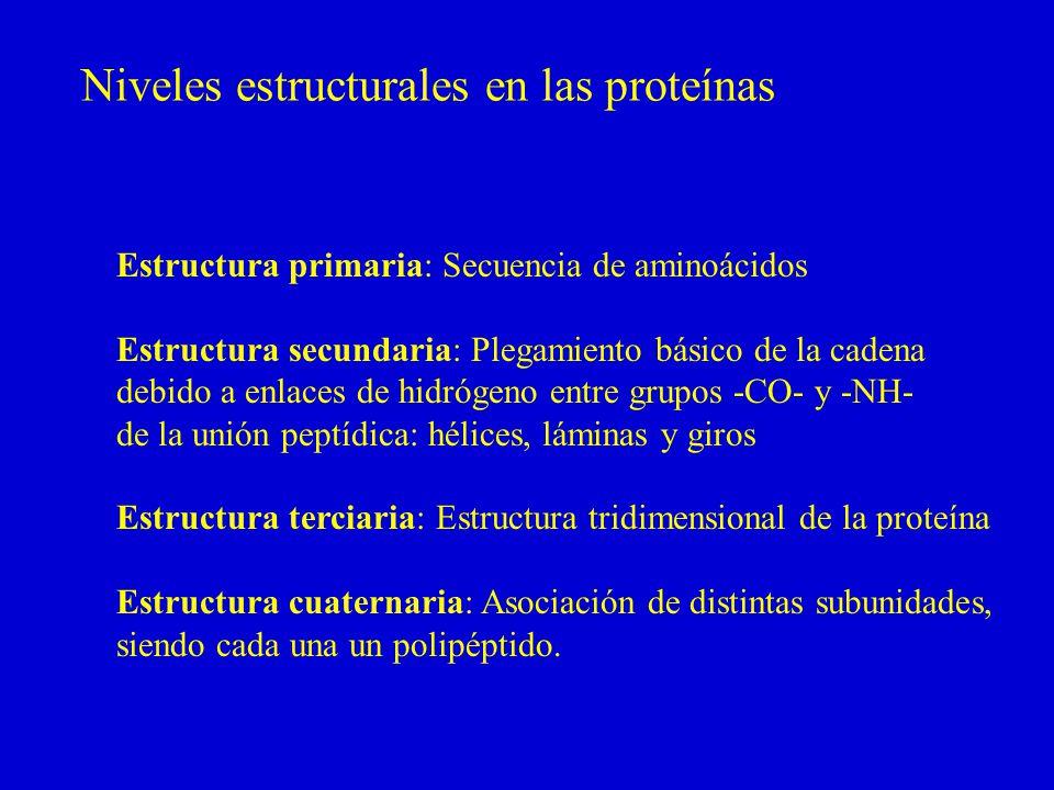 Niveles estructurales en las proteínas Estructura primaria: Secuencia de aminoácidos Estructura secundaria: Plegamiento básico de la cadena debido a enlaces de hidrógeno entre grupos -CO- y -NH- de la unión peptídica: hélices, láminas y giros Estructura terciaria: Estructura tridimensional de la proteína Estructura cuaternaria: Asociación de distintas subunidades, siendo cada una un polipéptido.