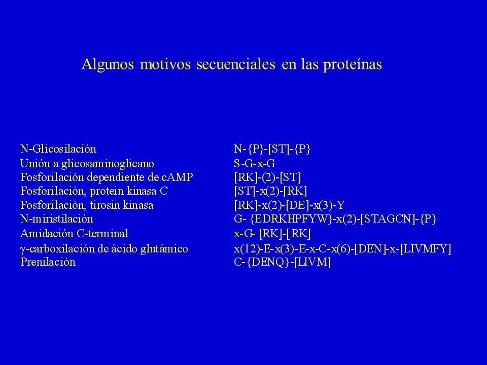 Algunos motivos secuenciales en las proteínas