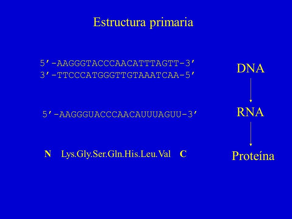 Siete hélices transmembrana (bacteriorrodopsina)