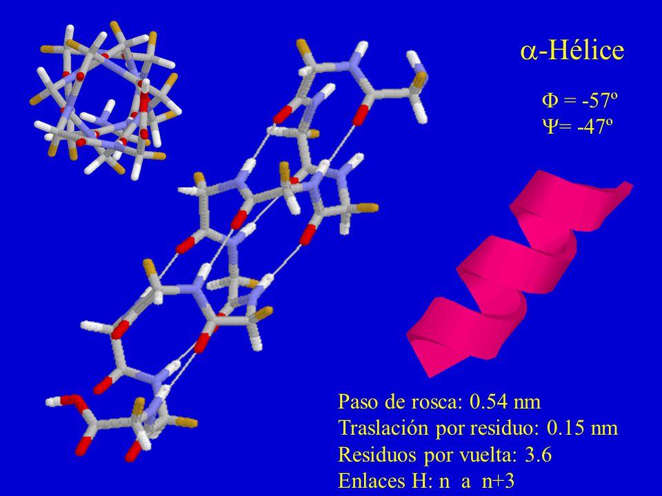 -Hélice = -57º = -47º Paso de rosca: 0.54 nm Traslación por residuo: 0.15 nm Residuos por vuelta: 3.6 Enlaces H: n a n+3