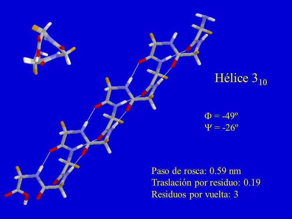 Hélice 3 10 = -49º = -26º Paso de rosca: 0.59 nm Traslación por residuo: 0.19 Residuos por vuelta: 3