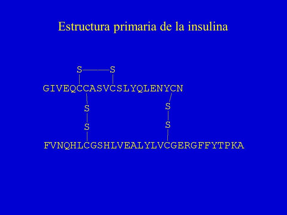 Estructura primaria de la insulina
