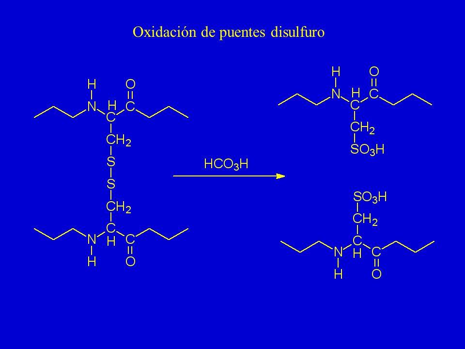 Reducción y alquilación de puentes disulfuro