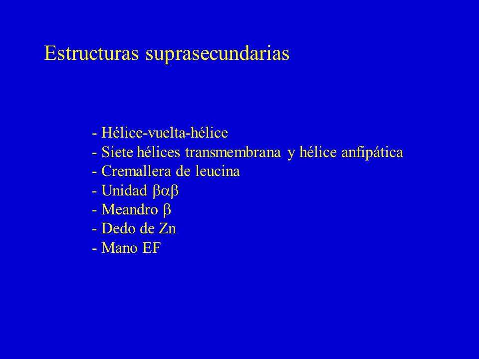 Estructuras suprasecundarias - Hélice-vuelta-hélice - Siete hélices transmembrana y hélice anfipática - Cremallera de leucina - Unidad - Meandro - Dedo de Zn - Mano EF