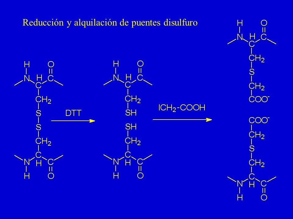 Determinación del N-término por la reacción de Sanger