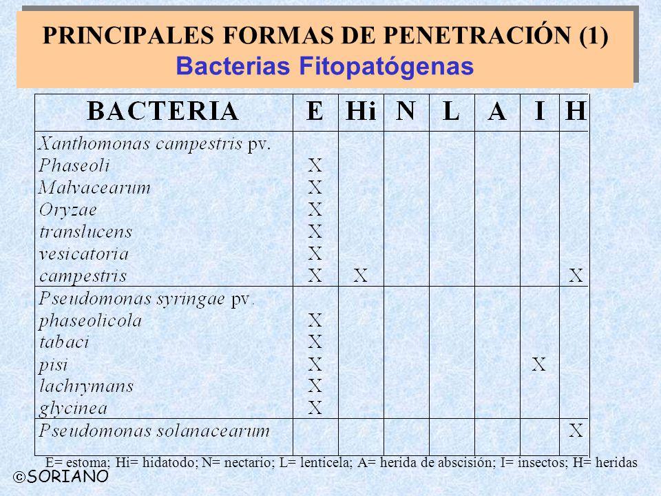 PRINCIPALES FORMAS DE PENETRACIÓN (1) Bacterias Fitopatógenas E= estoma; Hi= hidatodo; N= nectario; L= lenticela; A= herida de abscisión; I= insectos;