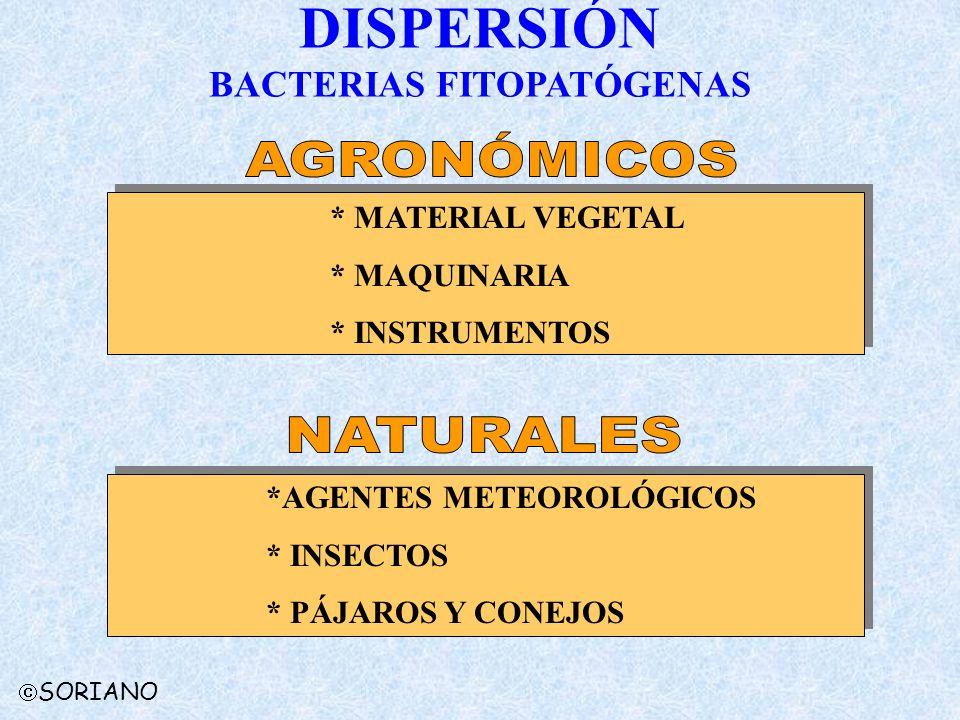 DISPERSIÓN BACTERIAS FITOPATÓGENAS * MATERIAL VEGETAL * MAQUINARIA * INSTRUMENTOS *AGENTES METEOROLÓGICOS * INSECTOS * PÁJAROS Y CONEJOS SORIANO