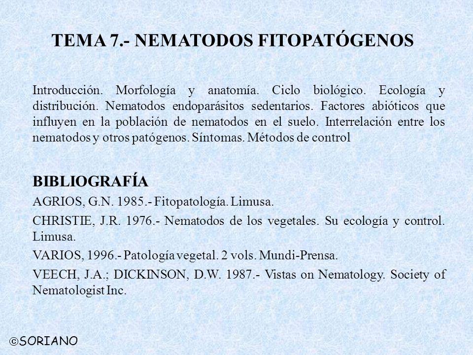 SORIANO TEMA 7.- NEMATODOS FITOPATÓGENOS Introducción. Morfología y anatomía. Ciclo biológico. Ecología y distribución. Nematodos endoparásitos sedent
