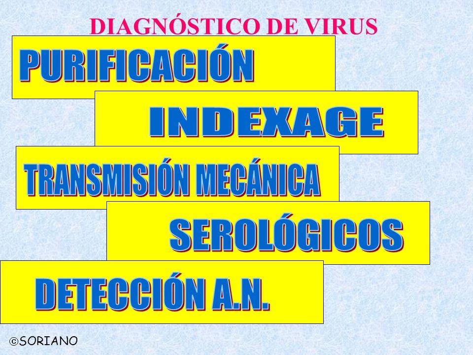 SORIANO DIAGNÓSTICO DE VIRUS