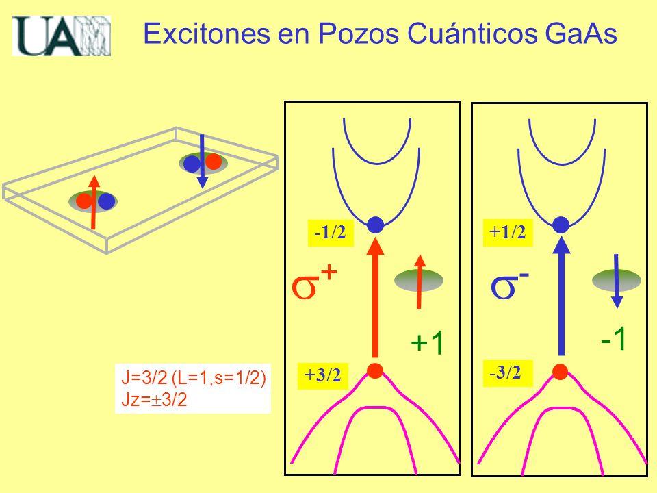 Excitones en Pozos Cuánticos GaAs J=3/2 (L=1,s=1/2) Jz= 3/2 -3/2 - +1/2 +3/2 + -1/2 +1