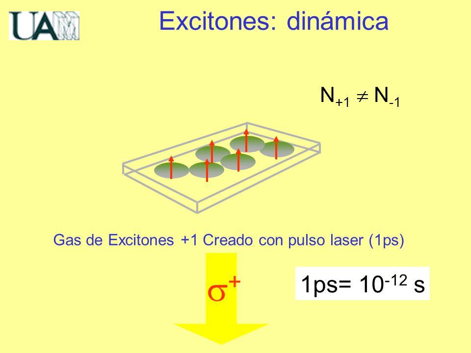 Gas de Excitones +1 Creado con pulso laser (1ps) + N +1 N -1 Excitones: dinámica 1ps= 10 -12 s