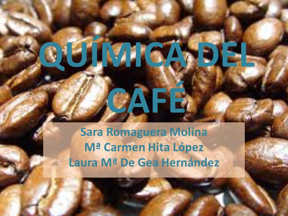 QUÍMICA DEL CAFÉ Sara Romaguera Molina Mª Carmen Hita López Laura Mª De Gea Hernández