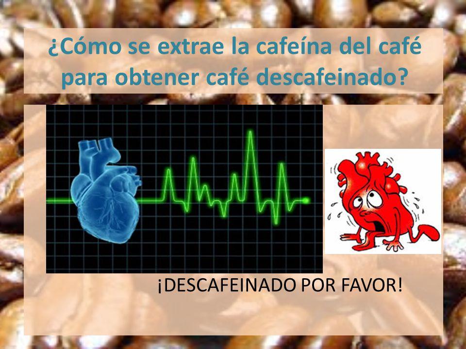 ¿Cómo se extrae la cafeína del café para obtener café descafeinado? ¡DESCAFEINADO POR FAVOR!