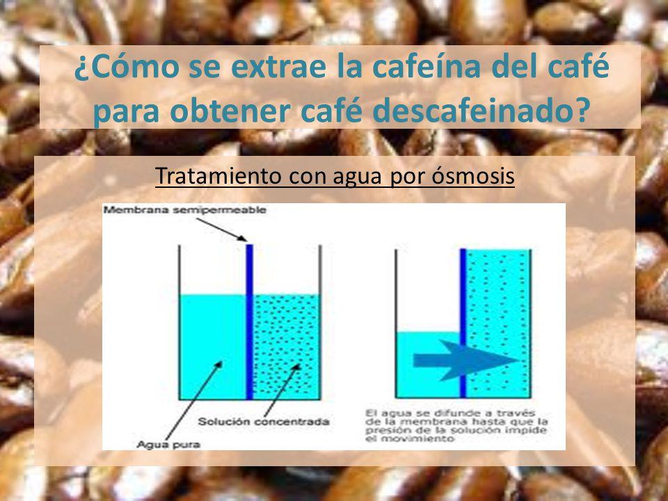 ¿Cómo se extrae la cafeína del café para obtener café descafeinado? Tratamiento con agua por ósmosis