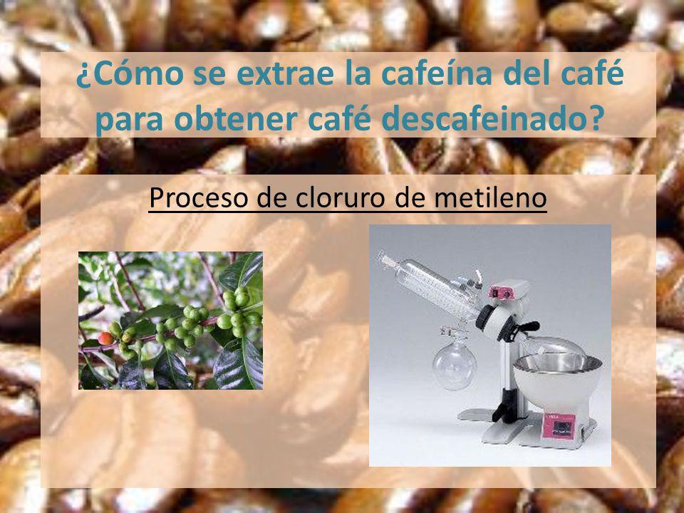 ¿Cómo se extrae la cafeína del café para obtener café descafeinado? Proceso de cloruro de metileno