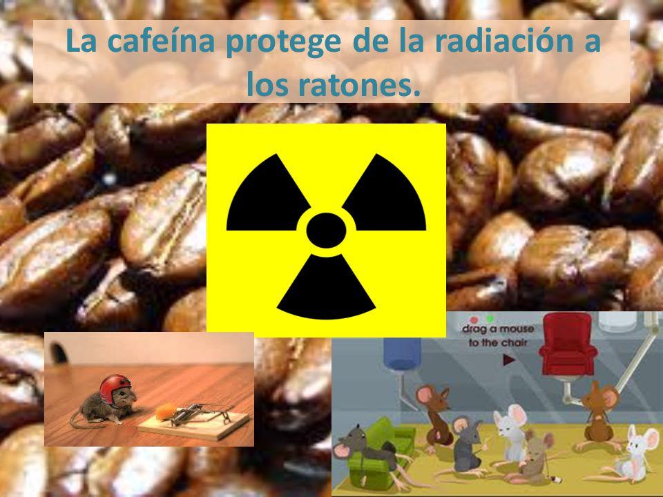 La cafeína protege de la radiación a los ratones.