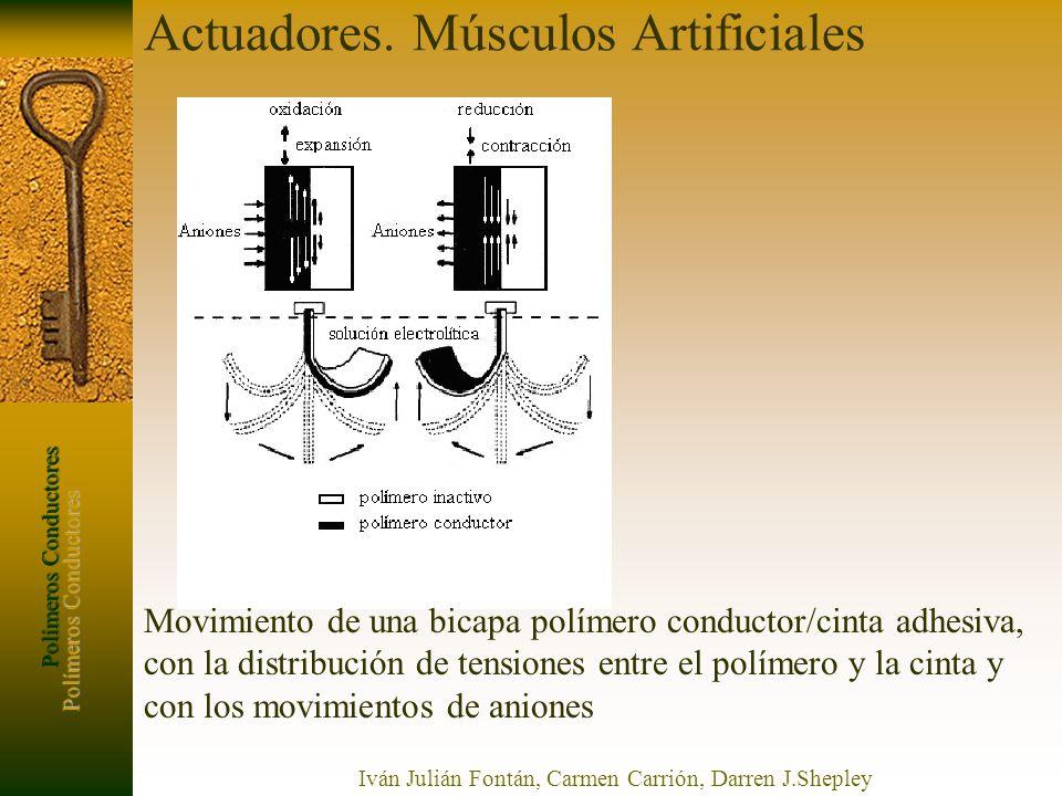 Polímeros Conductores Iván Julián Fontán, Carmen Carrión, Darren J.Shepley Actuadores. Músculos Artificiales Movimiento de una bicapa polímero conduct