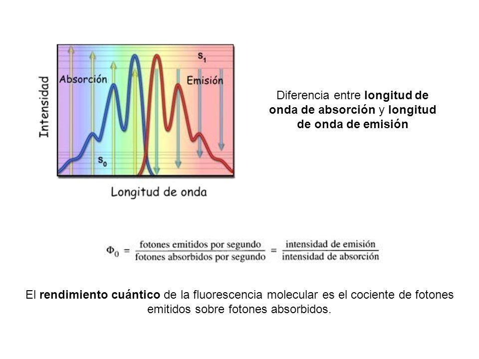 Diferencia entre longitud de onda de absorción y longitud de onda de emisión El rendimiento cuántico de la fluorescencia molecular es el cociente de fotones emitidos sobre fotones absorbidos.