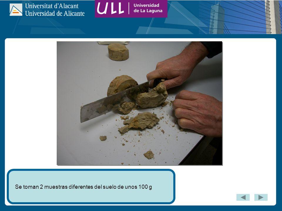 Se toman 2 muestras diferentes del suelo de unos 100 g