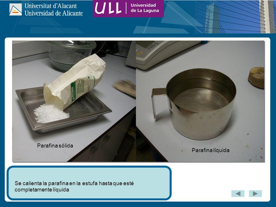 Se calienta la parafina en la estufa hasta que esté completamente líquida Parafina sólida Parafina líquida