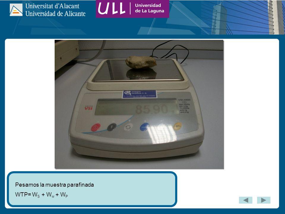 Pesamos la muestra parafinada WTP= W S + W w + W P