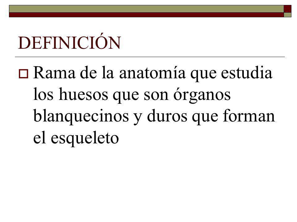 HUESOS DE LA CABEZA Etmoides: Se articula por detrás con el esfenoides -Presenta una lámina vertical que forma el tabique nasal Una lámina cribosa por donde pasan los nervios olfatorios -Tiene 2 laberintos (senos) -4 láminas llamadas cornetes