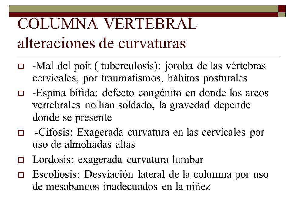 COLUMNA VÉRTEBRAL alteraciones de curvaturas -Mal del poit ( tuberculosis): joroba de las vértebras cervicales, por traumatismos, hábitos posturales -Espina bífida: defecto congénito en donde los arcos vertebrales no han soldado, la gravedad depende donde se presente -Cifosis: Exagerada curvatura en las cervicales por uso de almohadas altas Lordosis: exagerada curvatura lumbar Escoliosis: Desviación lateral de la columna por uso de mesabancos inadecuados en la niñez