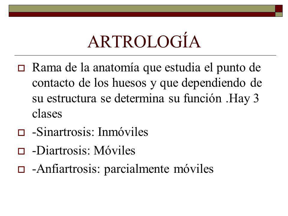 ARTROLOGÍA Rama de la anatomía que estudia el punto de contacto de los huesos y que dependiendo de su estructura se determina su función.Hay 3 clases -Sinartrosis: Inmóviles -Diartrosis: Móviles -Anfiartrosis: parcialmente móviles