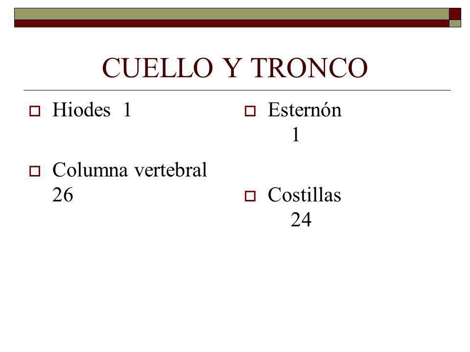 CUELLO Y TRONCO Hiodes1 Columna vertebral 26 Esternón 1 Costillas 24