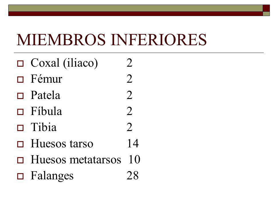 MIEMBROS INFERIORES Coxal (iliaco)2 Fémur2 Patela2 Fíbula2 Tibia2 Huesos tarso14 Huesos metatarsos 10 Falanges 28