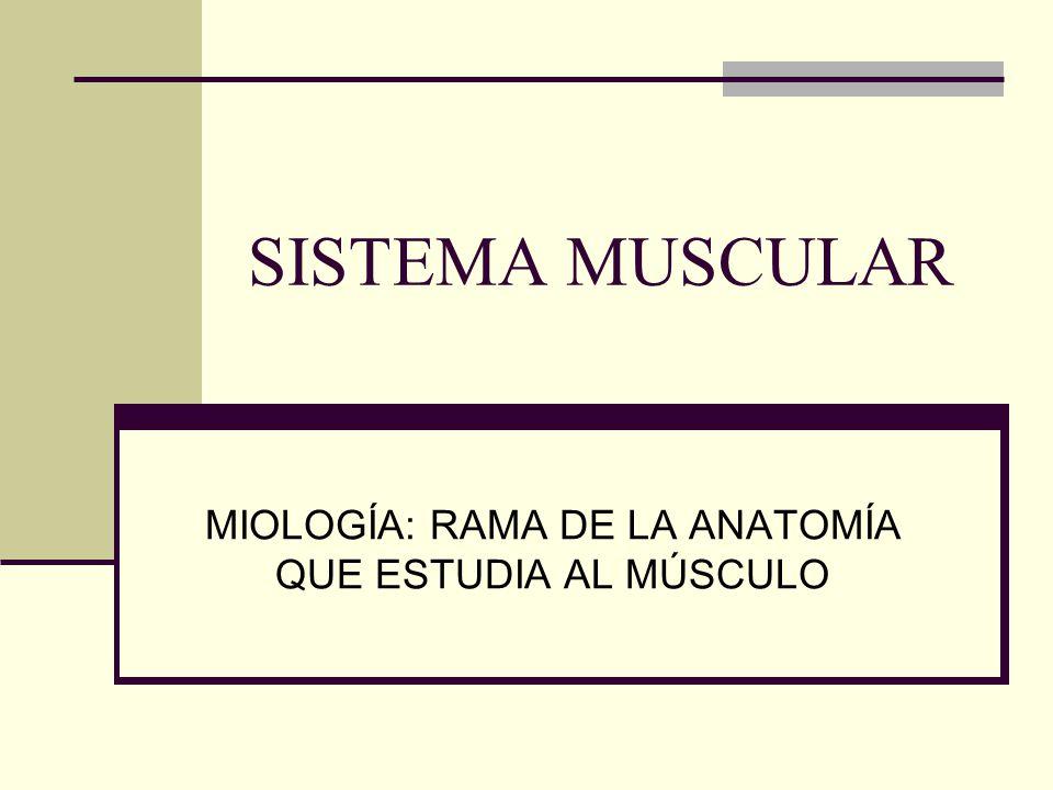 SISTEMA MUSCULAR MIOLOGÍA: RAMA DE LA ANATOMÍA QUE ESTUDIA AL MÚSCULO