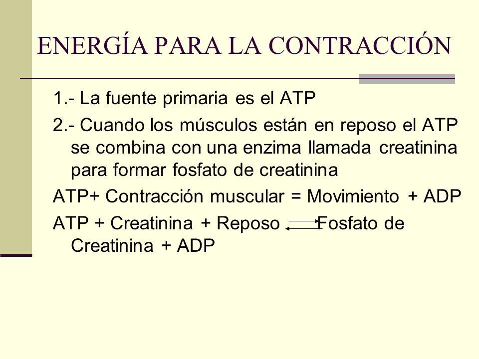 ENERGÍA PARA LA CONTRACCIÓN 1.- La fuente primaria es el ATP 2.- Cuando los músculos están en reposo el ATP se combina con una enzima llamada creatini