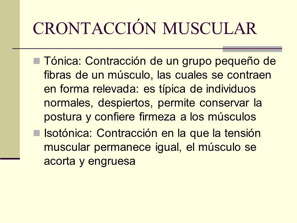 CRONTACCIÓN MUSCULAR Tónica: Contracción de un grupo pequeño de fibras de un músculo, las cuales se contraen en forma relevada: es típica de individuo