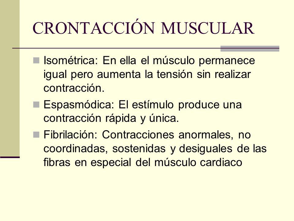 CRONTACCIÓN MUSCULAR Isométrica: En ella el músculo permanece igual pero aumenta la tensión sin realizar contracción. Espasmódica: El estímulo produce